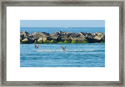 Feeding Frenzy Framed Print