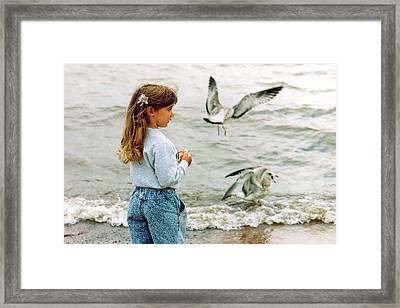 Feeding Gulls Framed Print