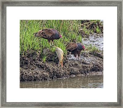 Framed Print featuring the pyrography Feeding On A Fish by Robert Pilkington
