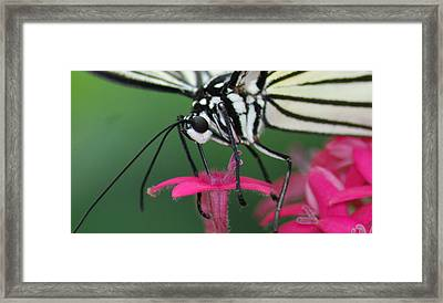 Framed Print featuring the photograph Feeding Rice Paper by Richard Bryce and Family