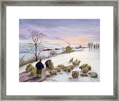 Feeding Sheep In Winter Framed Print by Margaret Loxton