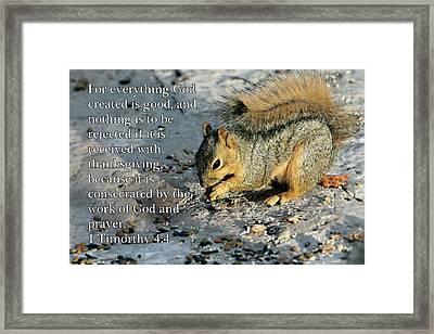 Feeding Squirrel 1timothy 4 V 4 Framed Print by Linda Phelps