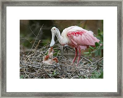 Feeding The Babies Framed Print