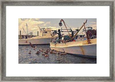 Feeding The Pelicans Framed Print