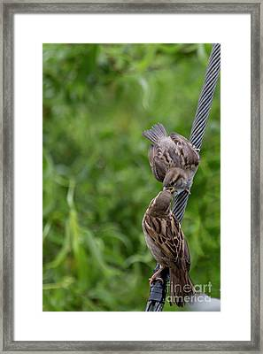 Framed Print featuring the photograph Feeding Time by Brian Roscorla