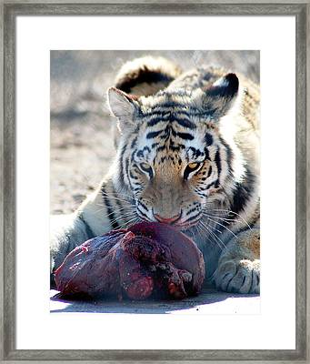 Feeding Time Framed Print by Heather S Huston