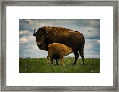 Framed Print featuring the photograph Feeding Time II by Gary Lengyel