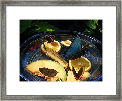 Feeding Time Framed Print by James and Vickie Rankin