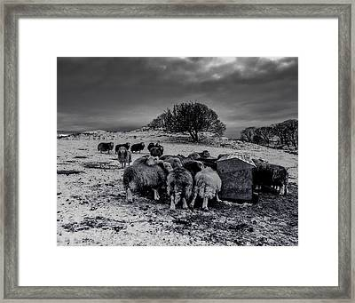 Framed Print featuring the photograph Feeding Time by Keith Elliott
