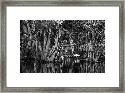 Feeding Time Framed Print by Marvin Spates