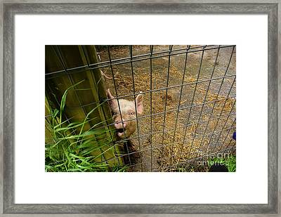 Feeding Time Framed Print by Oscar Moreno