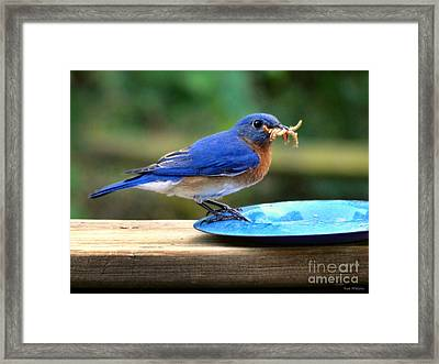Feeding Time Framed Print