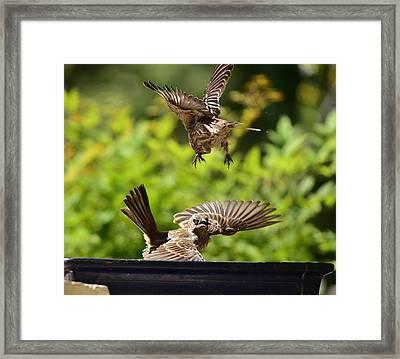 Feeding   Whoa Framed Print
