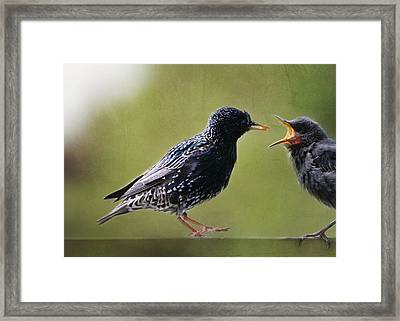 Feeding Young Birdie Framed Print by Heike Hultsch