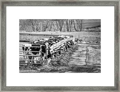 Framed Print featuring the photograph Feedlot by Dan Traun