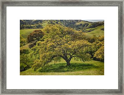 Feel My Beating Heart Framed Print by Laurie Search