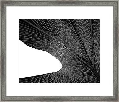 Feel Framed Print by Slade Roberts