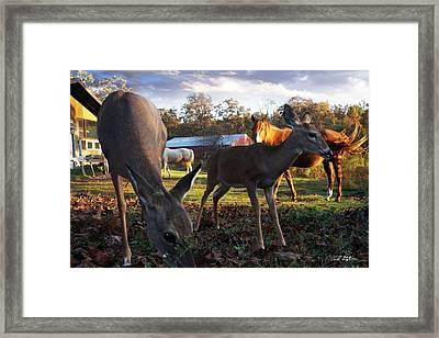 Feeling At Home Framed Print by Bill Stephens