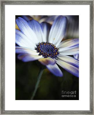 Feeling Blue In The Garden Shadows 2 Framed Print by Dorothy Lee