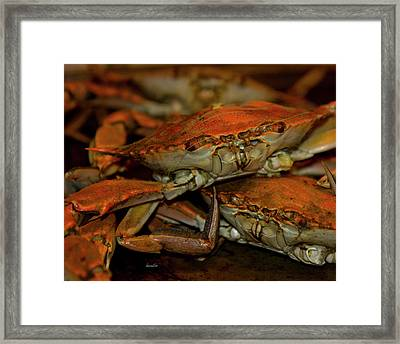 Feeling Crabby Framed Print by Betsy Knapp