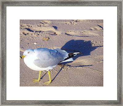 Feeling Followed  Framed Print
