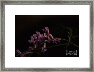 Feeling For The Last Bit Of Sunlight Framed Print