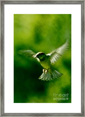 Feeling Free As A Bird Wall Art Print Framed Print by Carol F Austin