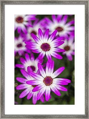Feeling Happy Framed Print