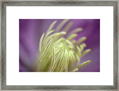 Feeling Framed Print by Mark Denham