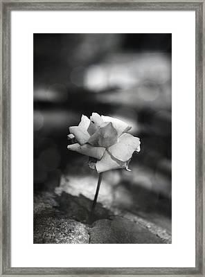 Feeling Framed Print by Nicole Frischlich