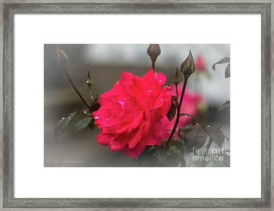 Feeling Rosy Framed Print