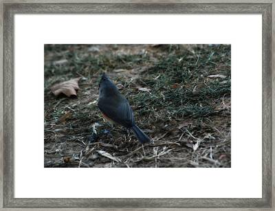 Feeling Shy Framed Print by Cheryl Helms