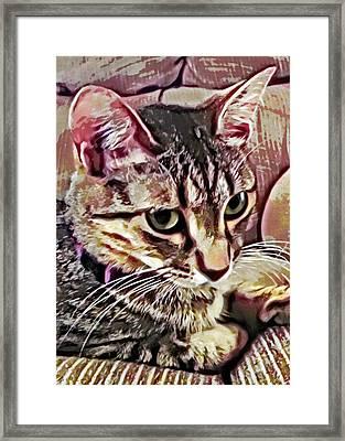 Feline Fancy Framed Print by David G Paul