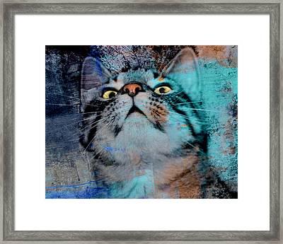Feline Focus Framed Print
