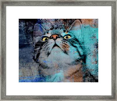 Feline Focus Framed Print by Kathy M Krause