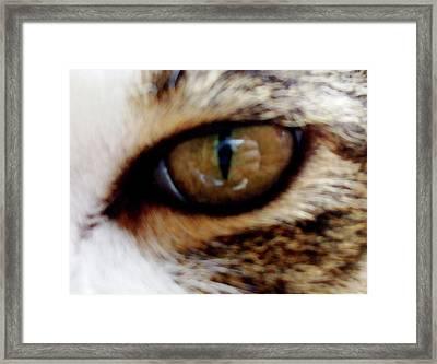 Feline Frenzy Framed Print