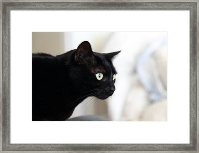 Feline On The Prowl Framed Print