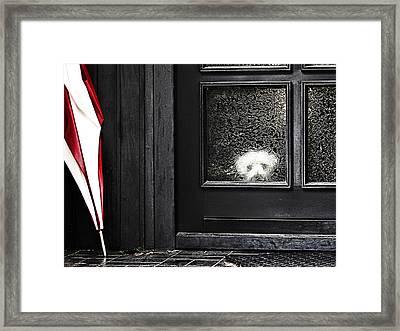 Felix Alone At Home Framed Print