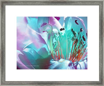 Feliz Verano Framed Print by Alfonso Garcia