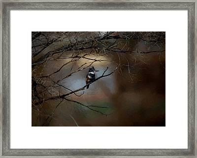 Female Belted Kingfisher 3 Framed Print by Ernie Echols