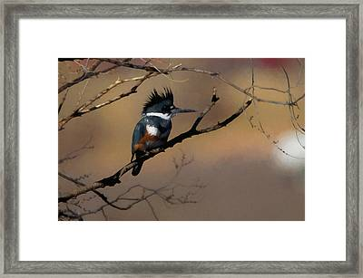 Framed Print featuring the digital art Female Belted Kingfisher by Ernie Echols