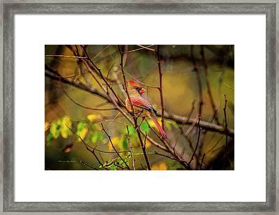 Female Cardinal #1 Framed Print