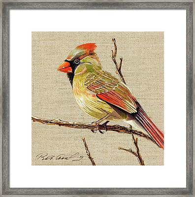 Female Cardinal Framed Print by Bob Coonts