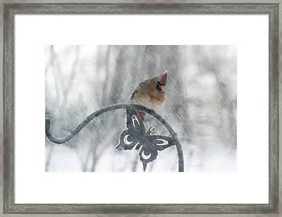 Female Cardinal In 2016 Blizzard Framed Print by Ericamaxine Price