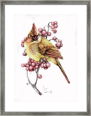 Female Cardinal Framed Print by Preston Shupp