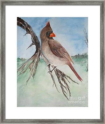 Framed Print featuring the painting Female Cardinal by Sibby S