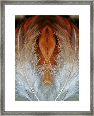 Female Feathers Framed Print