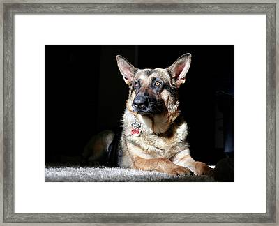 Female German Shepherd Framed Print
