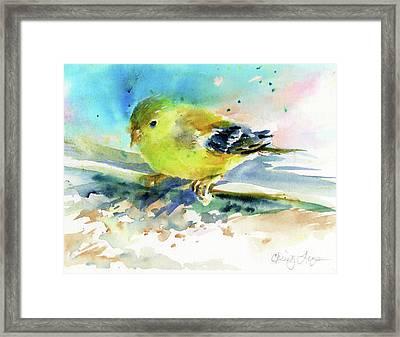 Female Goldfinch Framed Print by Christy Lemp