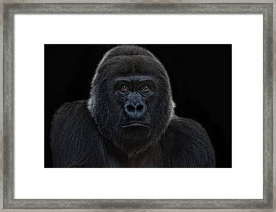 Female Gorilla Framed Print by Joachim G Pinkawa